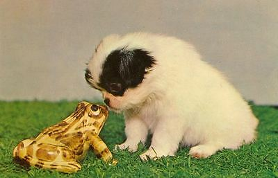 Vintage Japanese Chin Puppy Dog & Frog Postcard PC USA Made