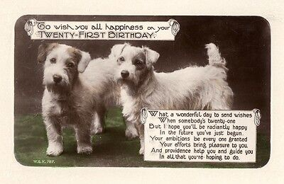 Vintage Sealyham Terrier Dog Embossed Birthday Postcard PC England 1929 RARE