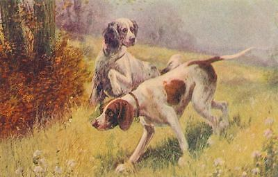 Vintage English Setter & Pointer Hunting Dog Postcard PC c1910 Dogs