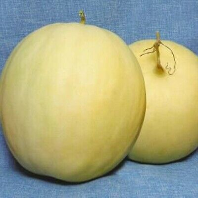 Honey Melon Severnaya Zvezda North Star F1 Seeds Russian Hybrid NON GMO