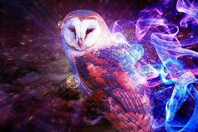 Home Fun art wall decor Animal Barn Owl oil painting picture Printed on canvas