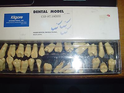 Nissin Kilgore Dental Model   C12-At.1A (32S)     Nice