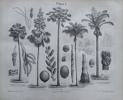 1875 PALMEN I und II original 2 antike Drucke antique prints Lithographie