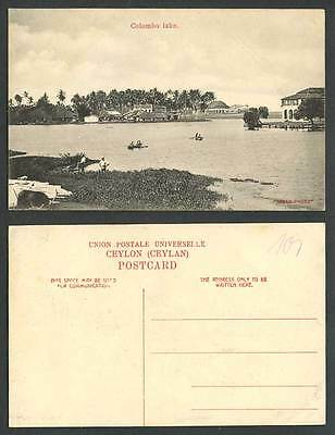 Ceylon Old Postcard Colombo Lake Panorama Palm Trees Houses Natives Rowing Boats