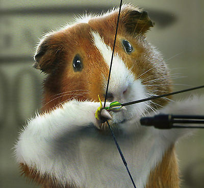 ARCHERY playing GUINEA PIG featured on a FRIDGE MAGNET