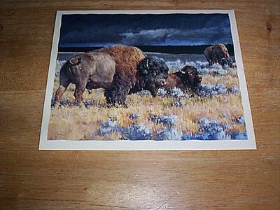 15  Bufflao Deluxe Blank Note Cards Envelopes & Envelope Seals by Nancy Glazier