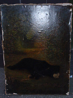 Antique Victorian Black Bear Laying In A Forest Oilograph Print On Canvas