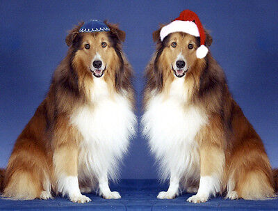 Pet Interfaith Christmas & Hanukkah Cards:Dog Sheltie