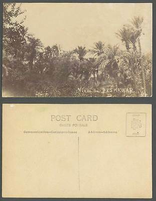 Pakistan Old Real Photo Postcard View in Peshawar Palm Trees Soldiers Brit India