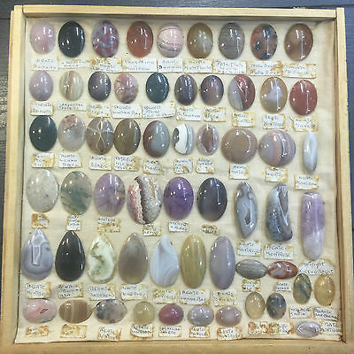 lapidary specimen cabinet with approx 300 gems minerals fossils VINTAGE