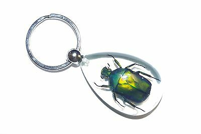 6 pieces Real Insect Keychain in the clear acrylic, June bug