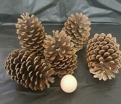 Pine Cones 9 Large Natural Pinecones Ideal for Christmas Decorations