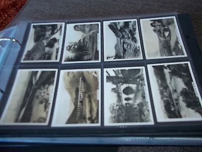 Senior Service Pattreiouex Bridges Of Britain Series Mf48 Cigarette Cards 1938