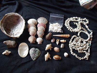 sea shell lot  abalone, mother of pearl, fossilized