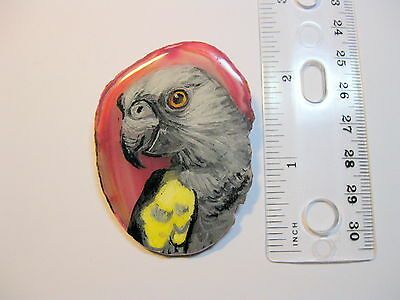 ruppels parrot pin/necklace on agate