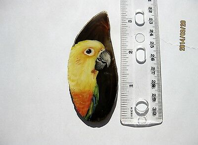 jenday conure pin/necklace on agate