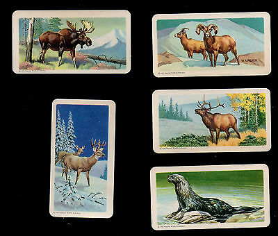 "1960 RED ROSE TEA  USA issued Blue back Cards ""Animals of North America"" Series"