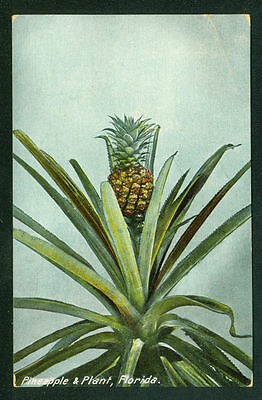 Pineapple Plant in Florida Postcard Made in Germany