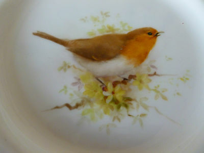 Antique Royal Worcester Robin Plate Hand Painted Bird c1906