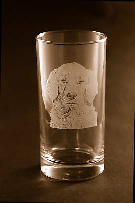 Etched Golden Retriever on Tumbler /Highball Glasses