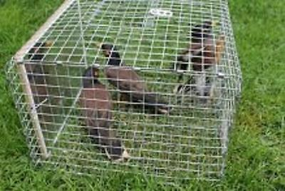 Voted best value Myna Bird Trap by users - Delivered all over Australia