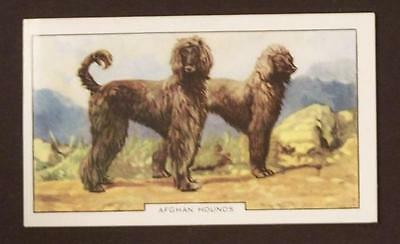 1930's Gallaher Dogs Card Afghan Hound