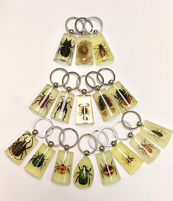 16 pieces Real Insect Key chain,assorted bugs in glowing in the dark or clear