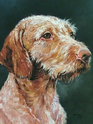 Hungarian Wire-haired Vizsla Sale Of Unmounted Prints