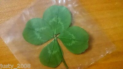 Genuine Real 4 Four Leaf Clover Lucky, Riches, Love !!!