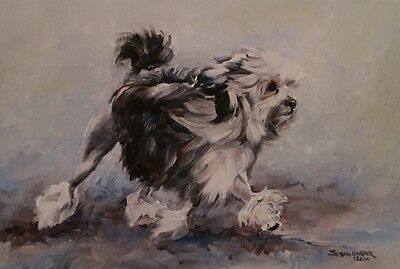 Lowchen Dog Sale Of Unmounted Prints