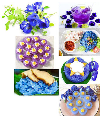 50-SEEDS-Pea-flowers-Blue-Butterfly-Pea-Flowers-Magical-Color-Changing-ThaiHerb