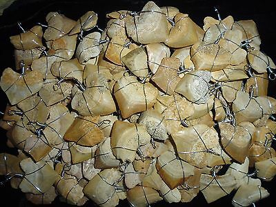 25 wire wrapped Squalicorax fossil Shark teeth necklace, pendants shark tooth