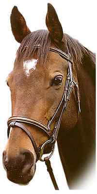 Sabre Richmond English Cavesson Bridle