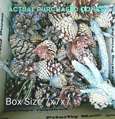 Assorted small Pinecones Pine Cone Mix As shown in Pic