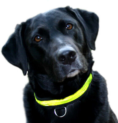Equisafety Flashing Dog Collar - Cat & Dog Safety Wear