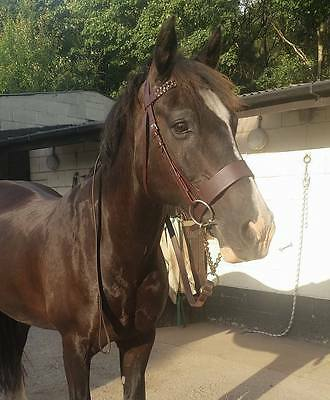 """New Plaited Hunter Bridle 2"""" Wide Noseband with Plaited Reins Clearance"""