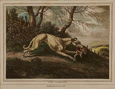 After Samuel Howitt, Mounted Coloured Engraving, The Lurcher, 1834, Sporting