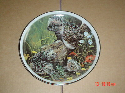 Norfolk China Collectors Plate Hedgehogs