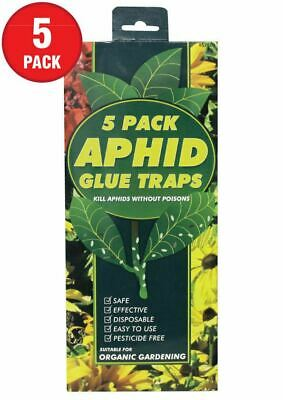 Aphid Glue Traps Kill Aphids Without Poisons 5 Traps Included