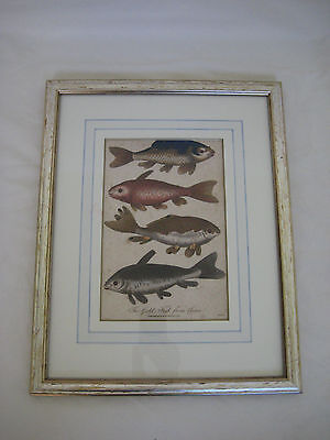 1797 Antique Hand Coloured THE GOLD FISH FROM CHINA Print