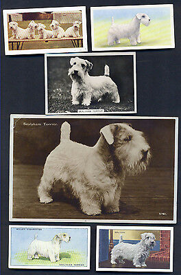 Sealyham Terrier Post Card-Valentines & 5 Cigarette Cards - Dog