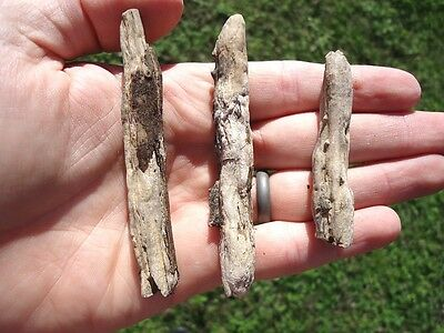 3 Piece Rare Florida Petrified Wood Fossil Fossils Tree Branch Natural Specimens