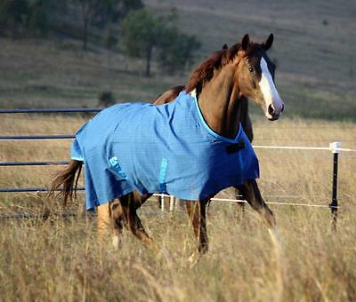 "6'3"" Waterproof Ripstop Canvas Unlined Winter or summer Horse Rug"