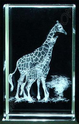 Crystal Glass Laser Etched Two Giraffes Ornament BNIB (sb05)