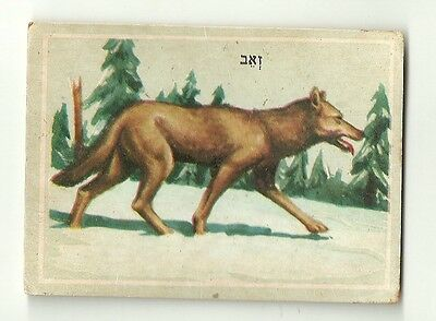 Judaica Israel Old Trading Card Gray Wolf