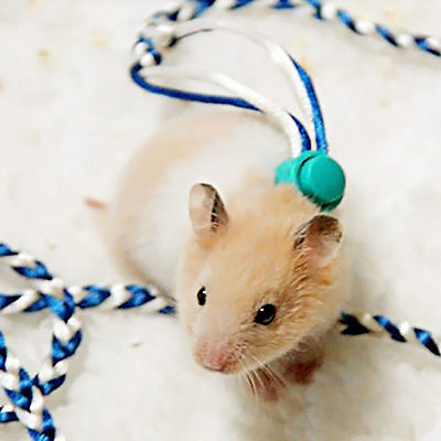 Animal Leash Rope For Hamster Mouse Squirrel Sugar Glider Harness Leashes RX