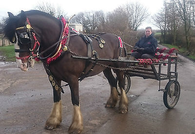 Heavy Horse Exercise Cart - Suit 16hh to 18hh Horse
