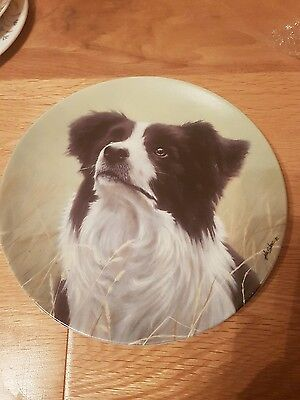 The border collie plate by Yours faithfully