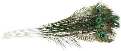 Peacock Eye Feathers 12/Pkg-Natural 096709058763