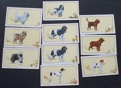 cigarette cards GALLAHER DOGS IN BLOCK